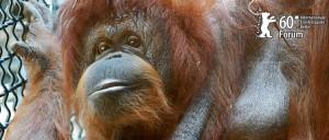 orang-outan, affiche du film