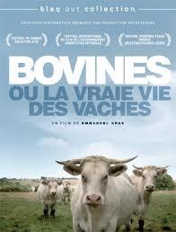 Image Bovines